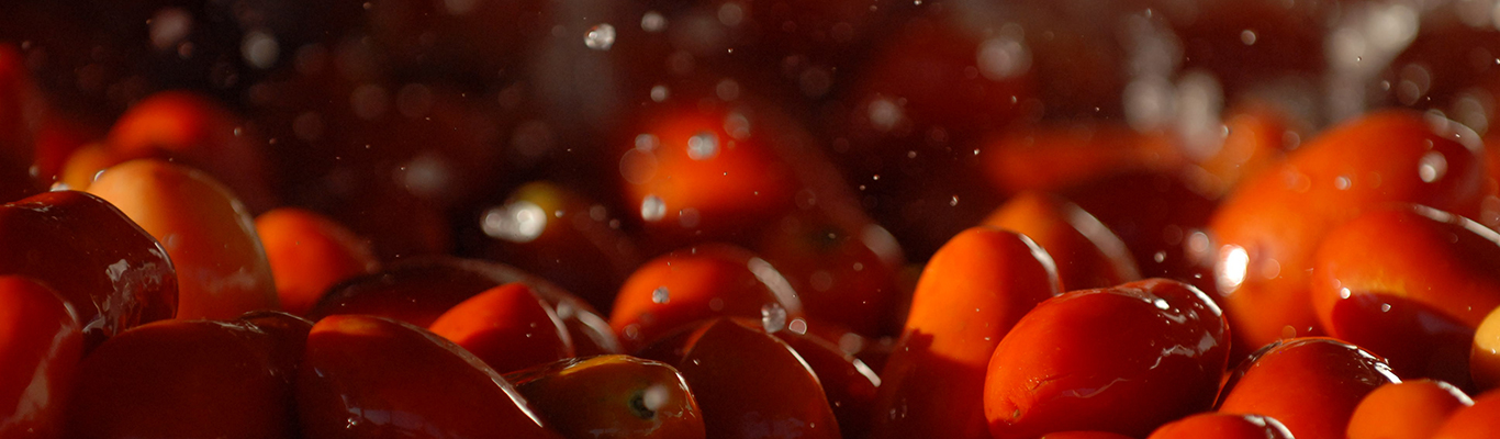 Information-Resources-Header-New with Tomatoes